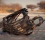 Etosha - Skeleton