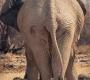 Etosha - Elephant's but