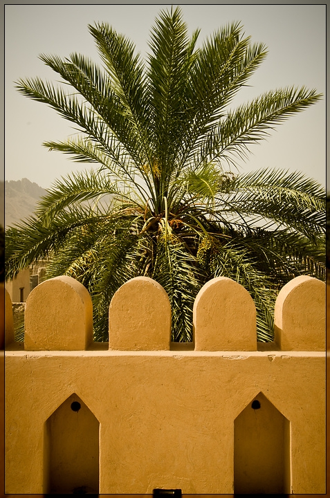 Nizwa - Palm Tree