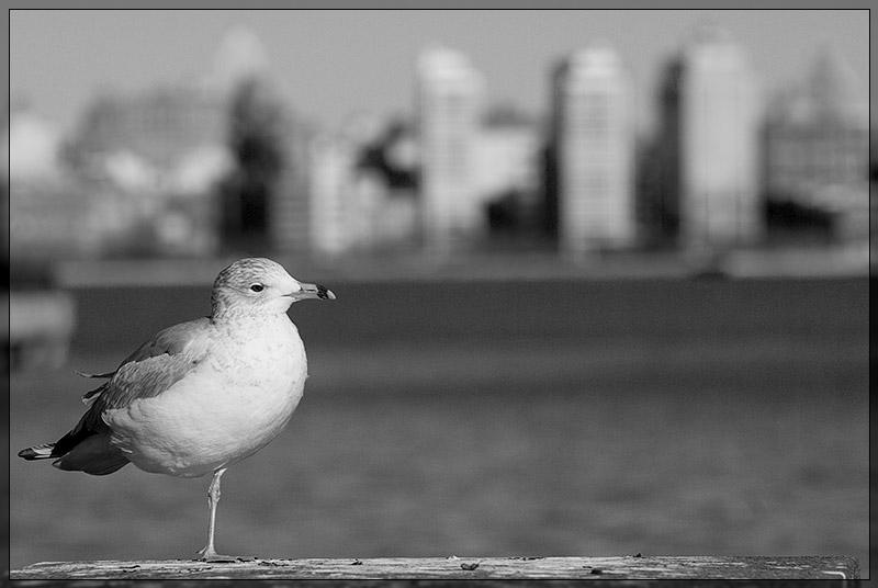 Manhattan from Hoboken