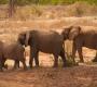 Seisfontein - Desert Elephants