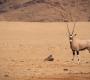 Seisfontein - Oryx