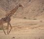 Seisfontein - Wild Giraf