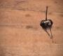 Seisfontein - Racing Ostrich