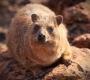 Waterberg - Marmot