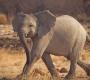 Etosha - Baby Elephant