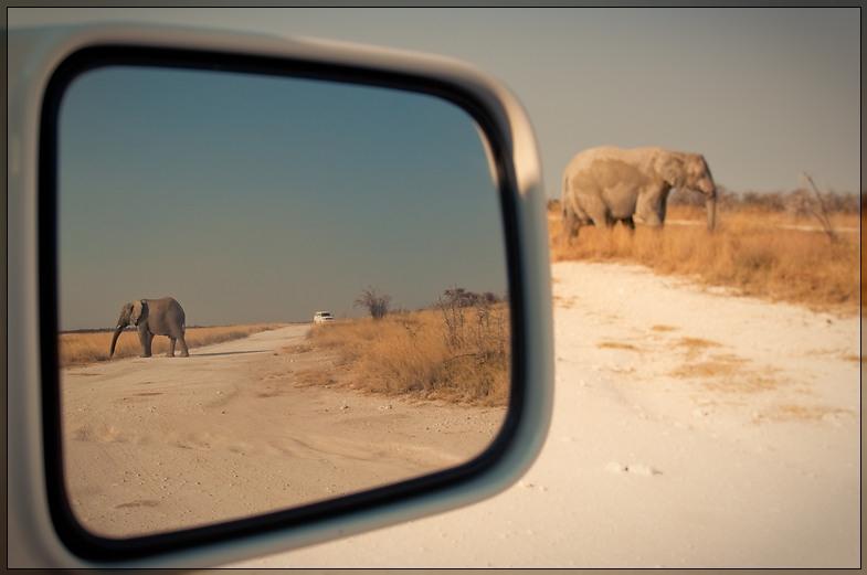 Etosha - Elephants Front & Back