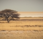 Etosha - Tree